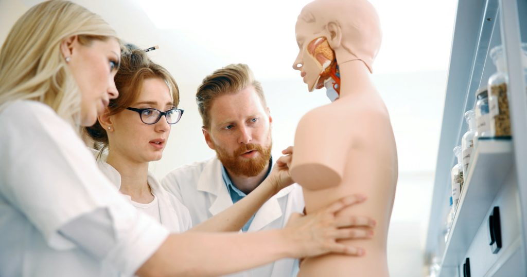 A group researching an anatomical model of a person